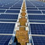 Module von Heckert Solar